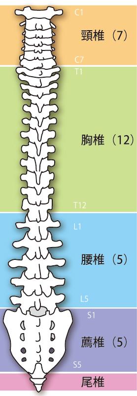 頚椎椎間板ヘルニアの原因は体の歪みです。