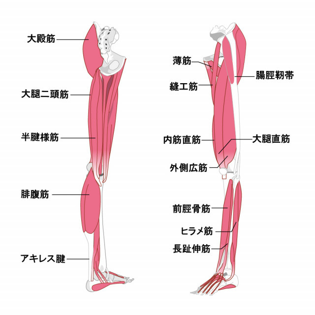 肉離れの原因は体の歪みです。