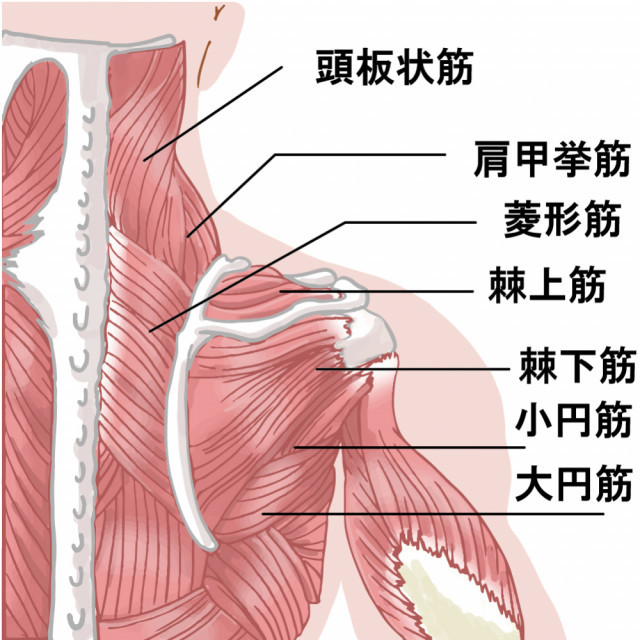 当院の「頸肩腕症候群」に対してのアプローチ