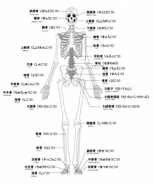 当院の膝痛へのアプローチとは